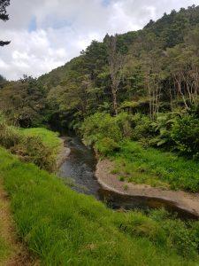 Mackerel Forest Track