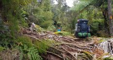 Te Araroa Trail Day 7 - Fallen Trees in Ratea Forest