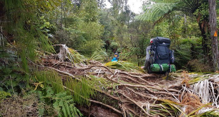 Te Araroa Trail Day 7 - Fallen Trees in Ratea Forest