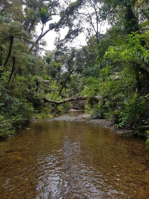 Te Araroa Trail Day 13 - Papakauri River walk