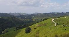 Te Araroa Trail Edgerley Road to Puhoi