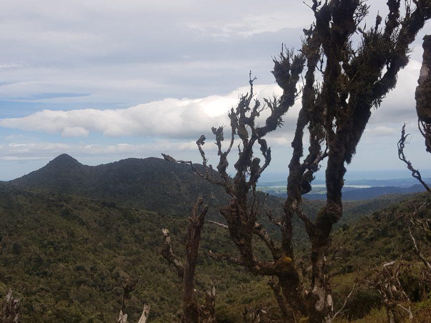 Te Araroa Trail Mount Pirongia
