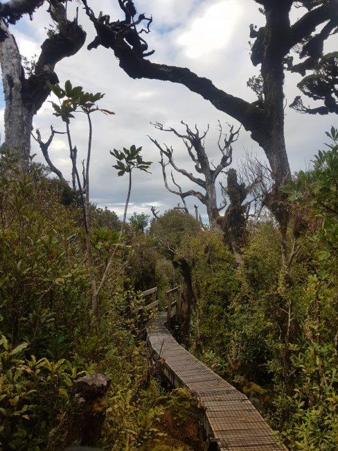 Te Araroa Trail Noel Sandford Boardwalk Mount Pirongia