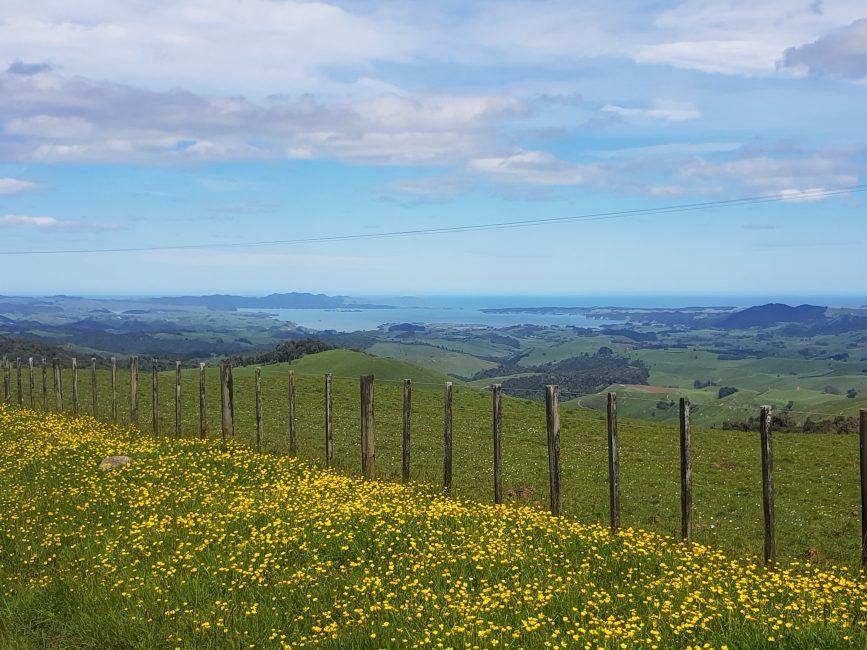 Te Araroa Trail Views to Kawhia harbour