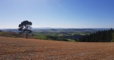 Te Araroa Trail Waikato