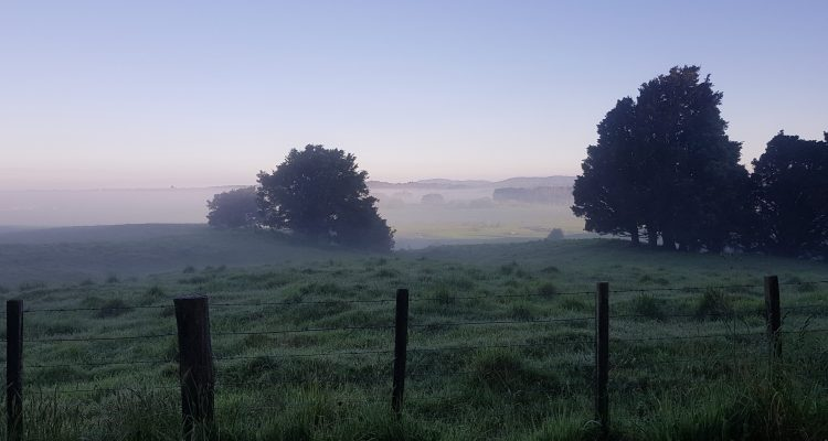 Te Araroa Trail Day 41 - Dawn on the edge of Pureora Forest Park