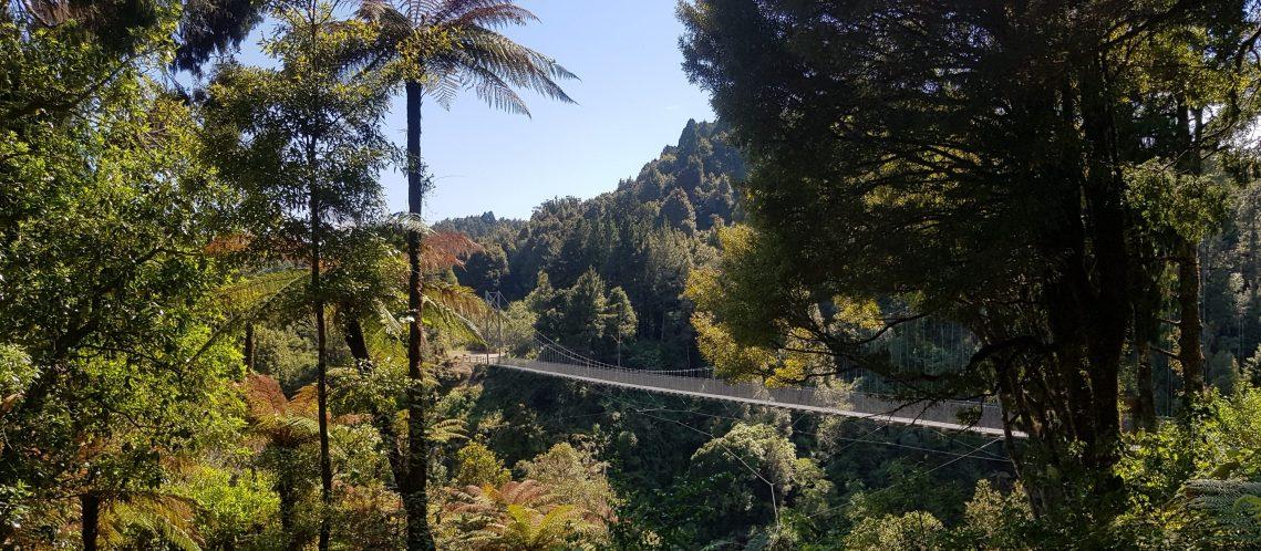 Te Araroa Trail Timber Trail
