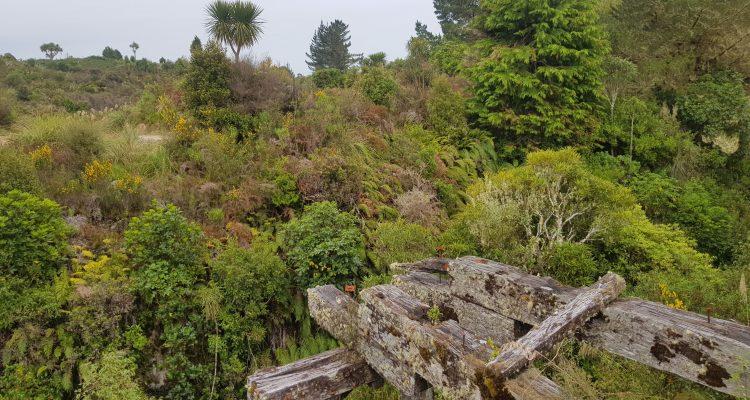 Te Araroa Trail Timber Trail Pureora Forest Park