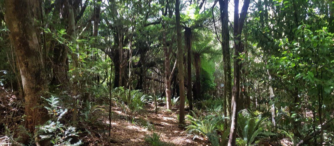 Te Araroa Trail Burtton's Track