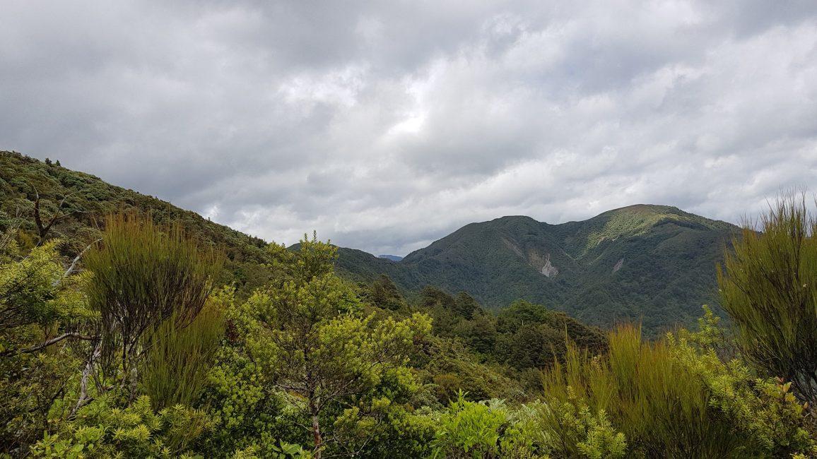 Te Araroa Trail near Te Matawai hut Tararua ranges
