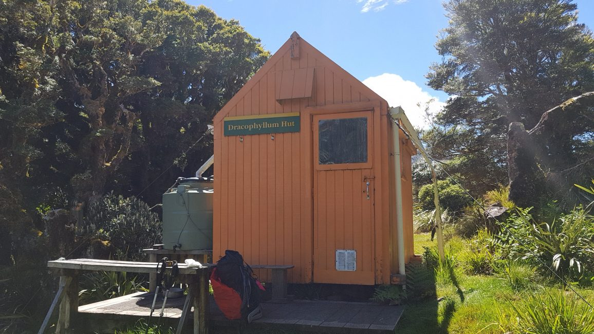 Te Araroa Trail Dracophyllum hut Tararuas