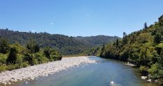 Te Araroa Trail Near Otaki Forks