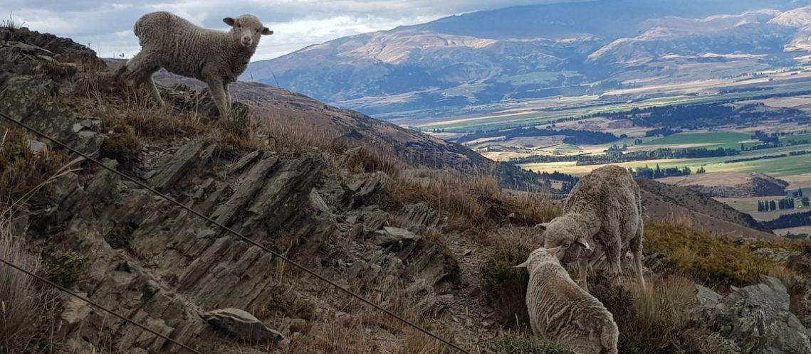 Te Araroa Trail Day 95 - Descending Breast Hill