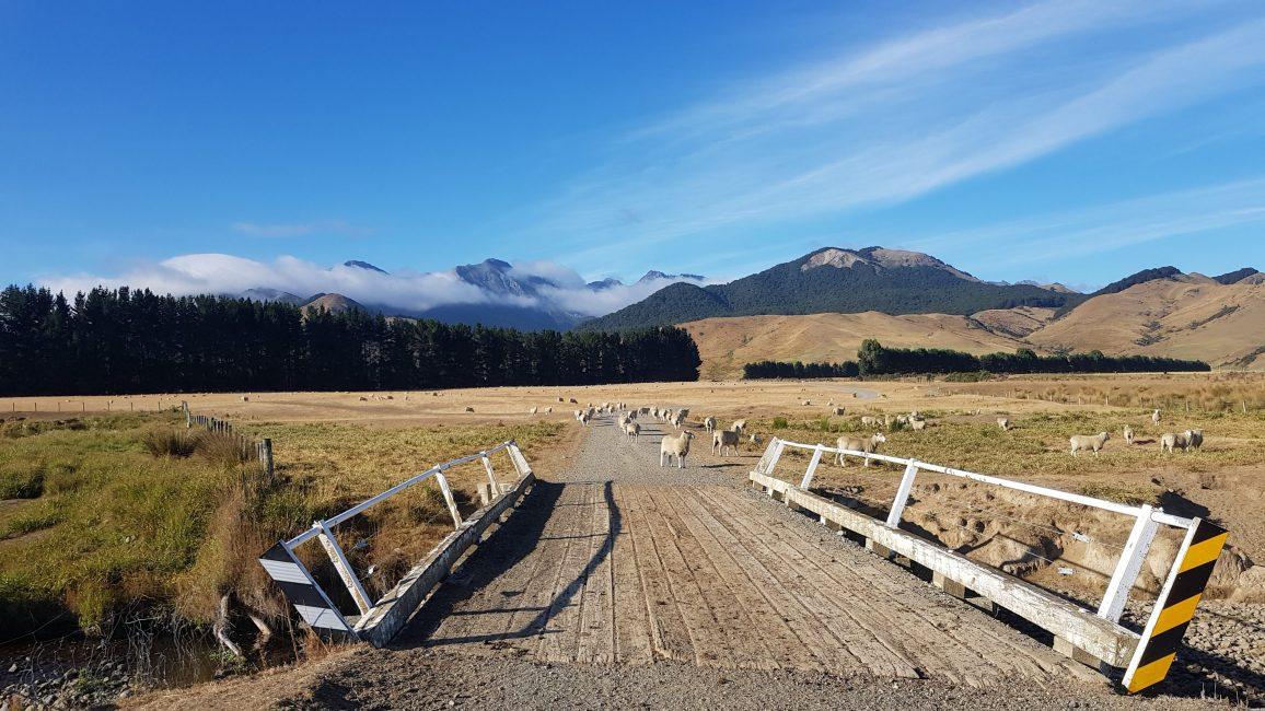 Te Araroa Trail Day 108 - Princhester Road