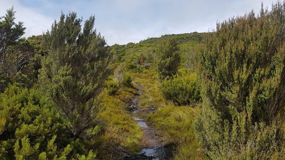 Te Araroa Trail Day 112 - Bog and tussock