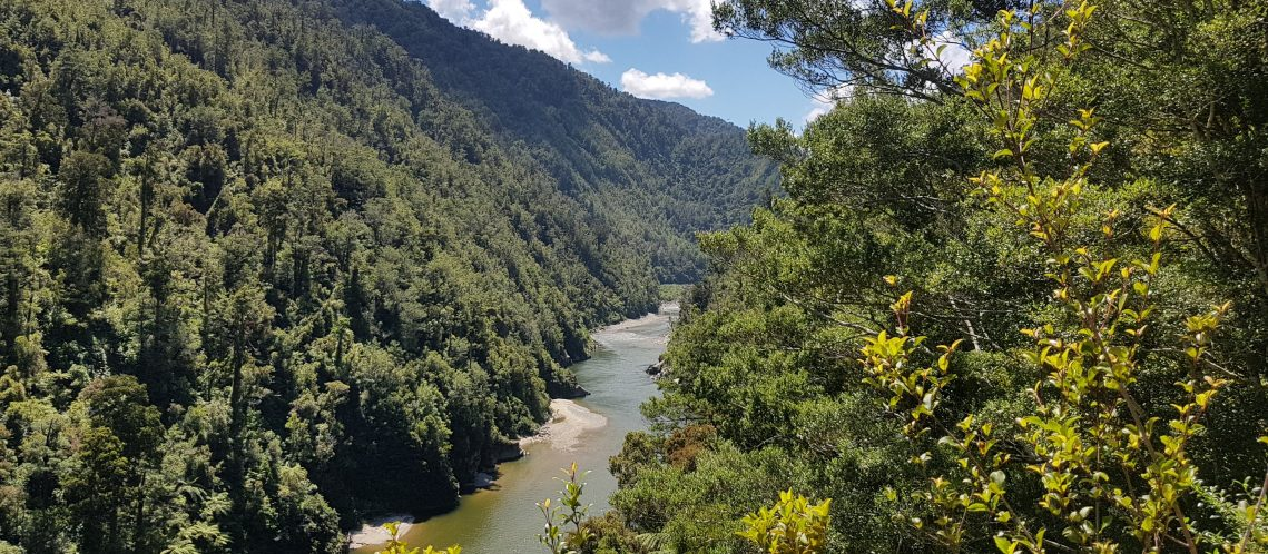 Te Araroa Trail Day 118 - The Old Ghost Road trail
