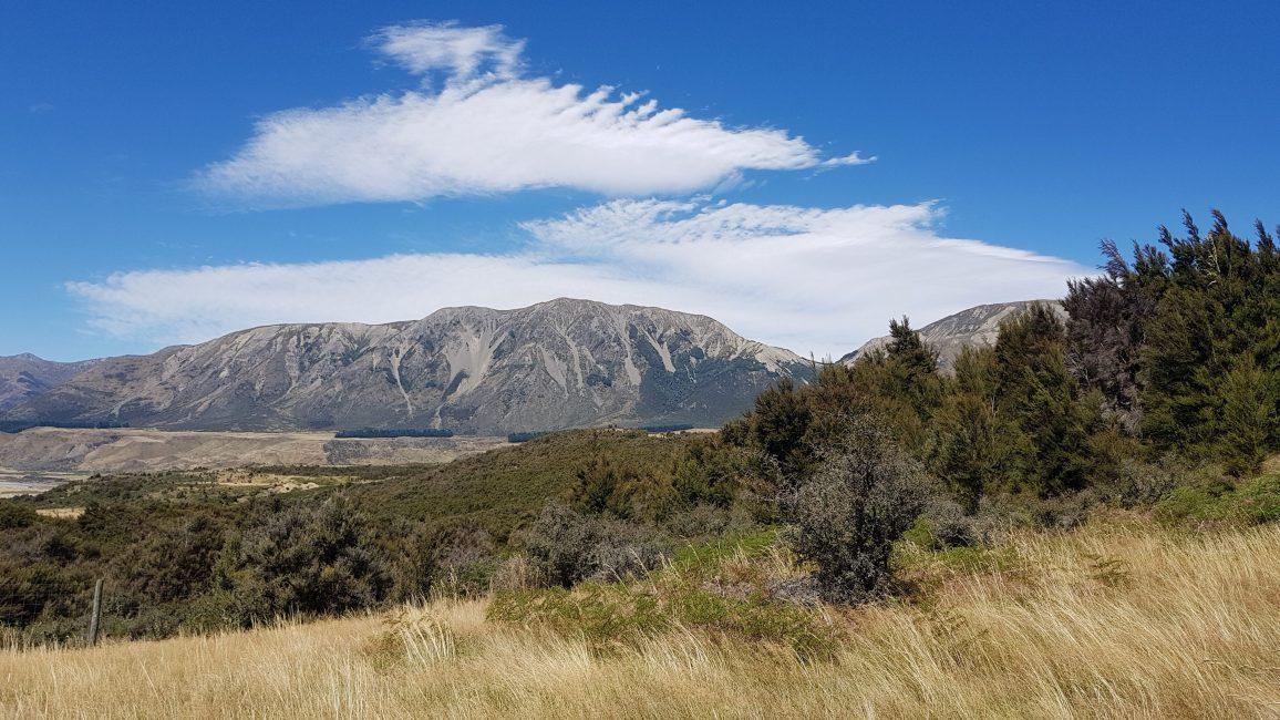 Te Araroa Trail Day 128 - Tui track