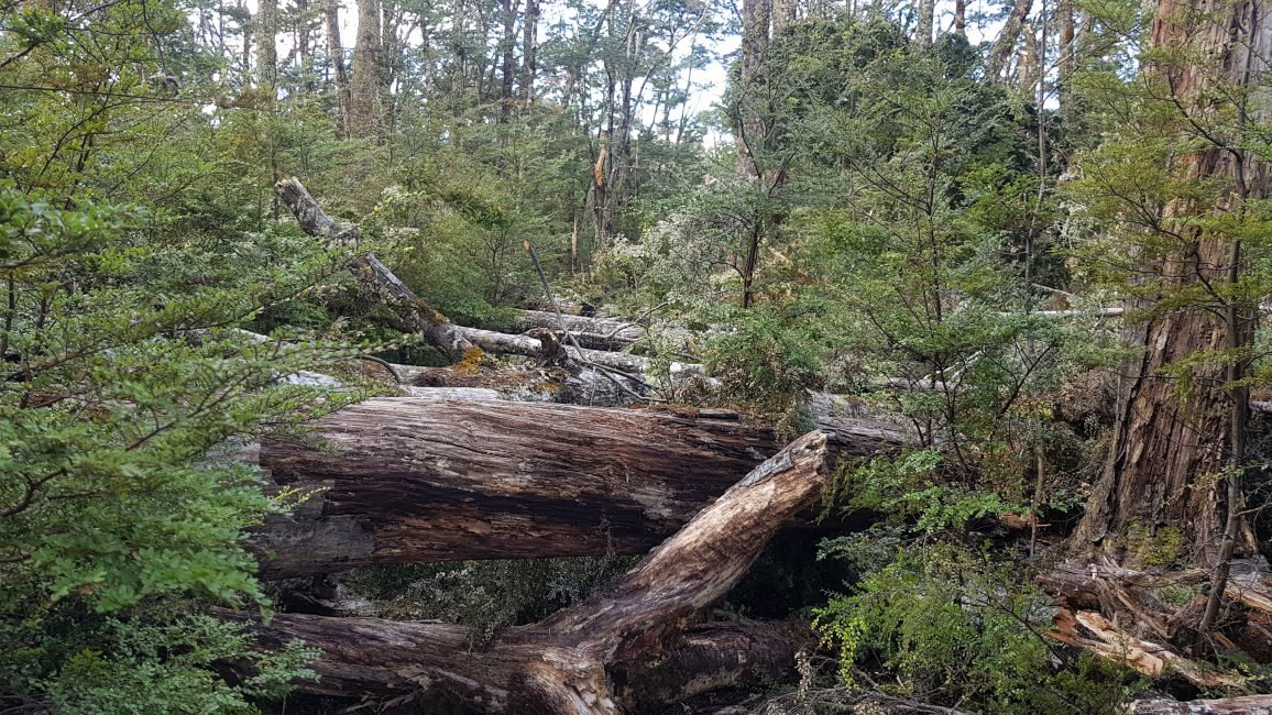 Te Araroa Trail Day 128 - Tree apocalypse towards Hope Kiwi Lodge