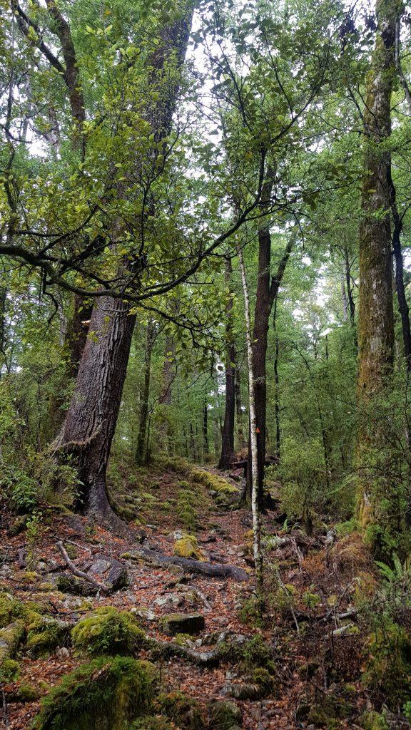 Te Araroa Trail Day 81 - Middy to Rocks hut