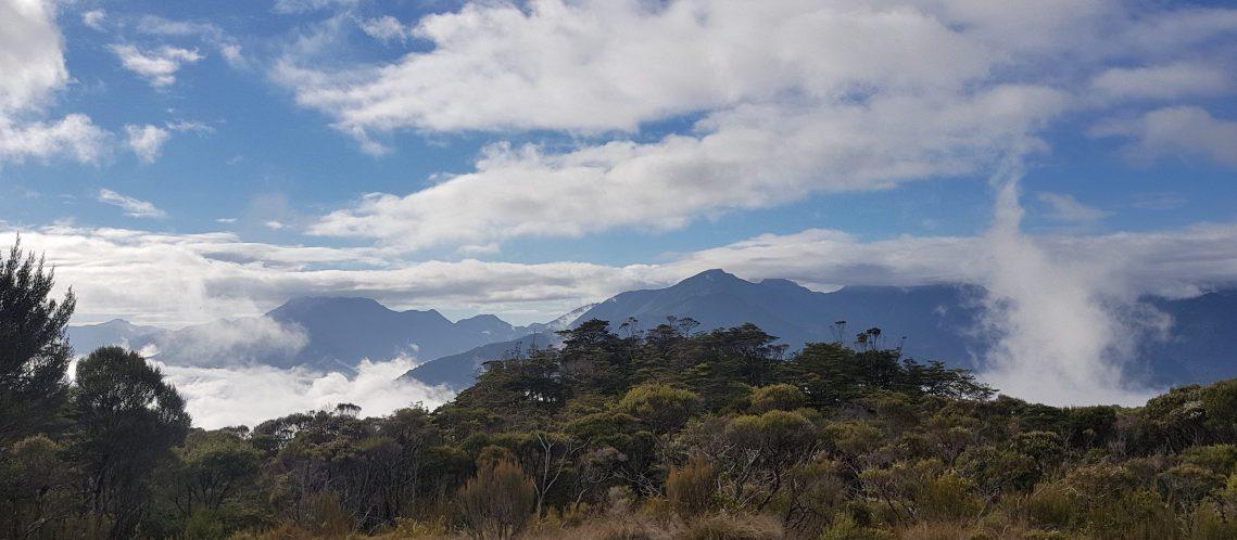 Te Araroa Trail Day 82 - Dun Mountain trail