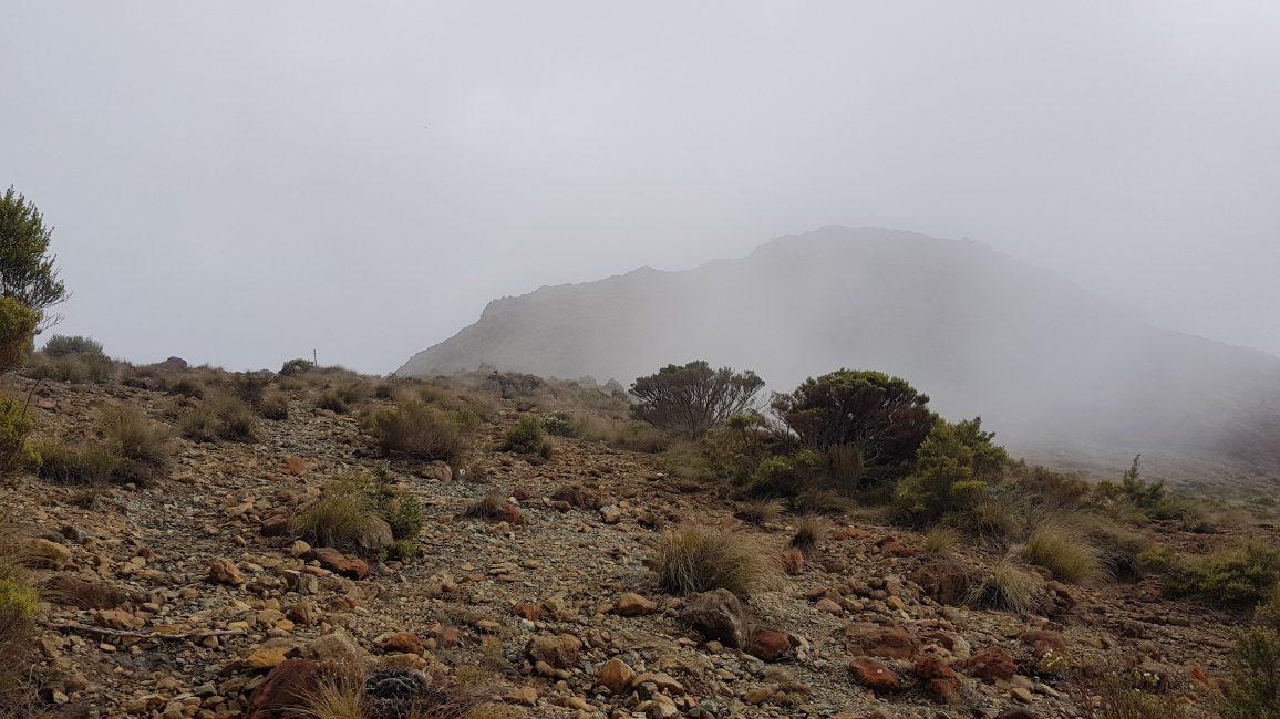 Te Araroa Trail Day 82 - Foggy start to the morning between Rocks hut and Dun Mountain