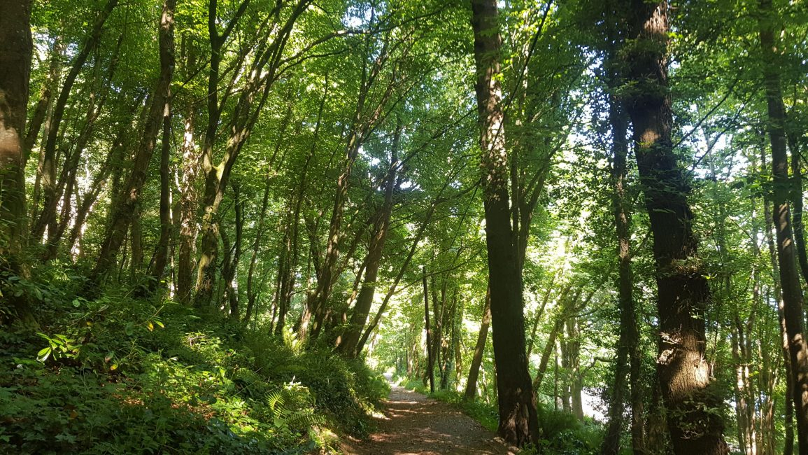 Beautiful woodland walk to Cawsand