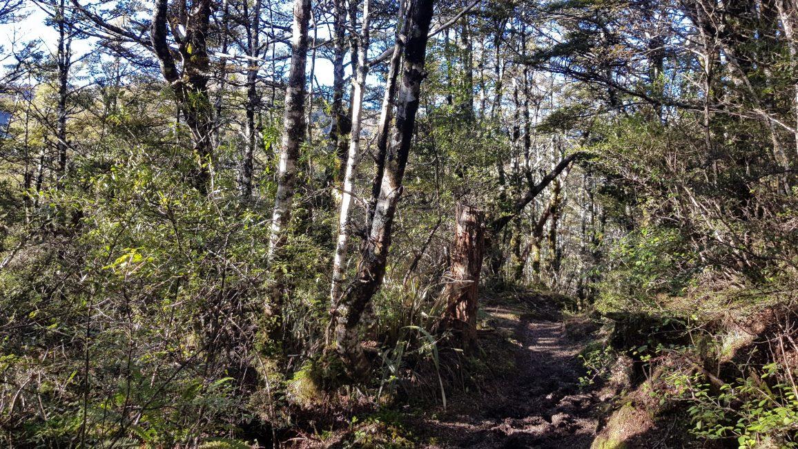 Mount Urchin Track Kaimanawa Forest Park