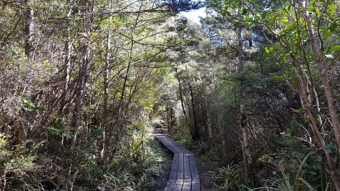Taranaki Falls boardwalk section