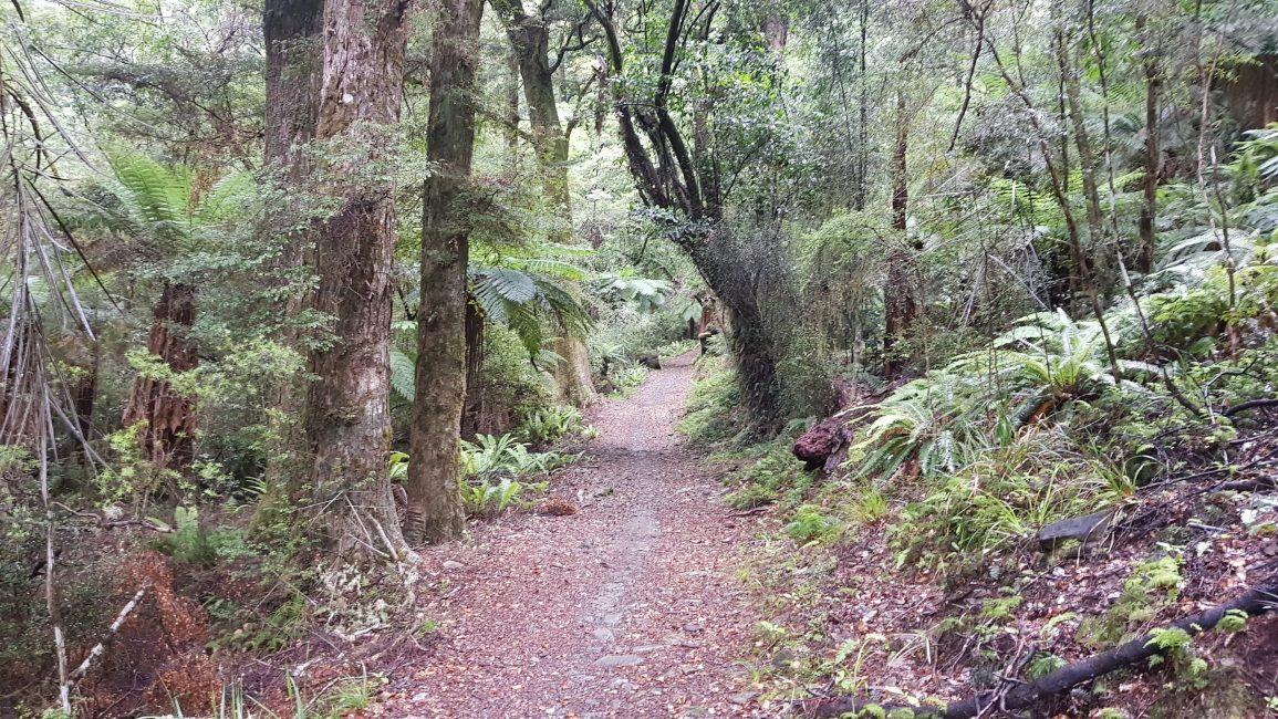 From Maitai dam to Coppermine Saddle