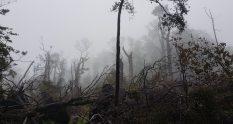 tree fall Rocks Browning hut