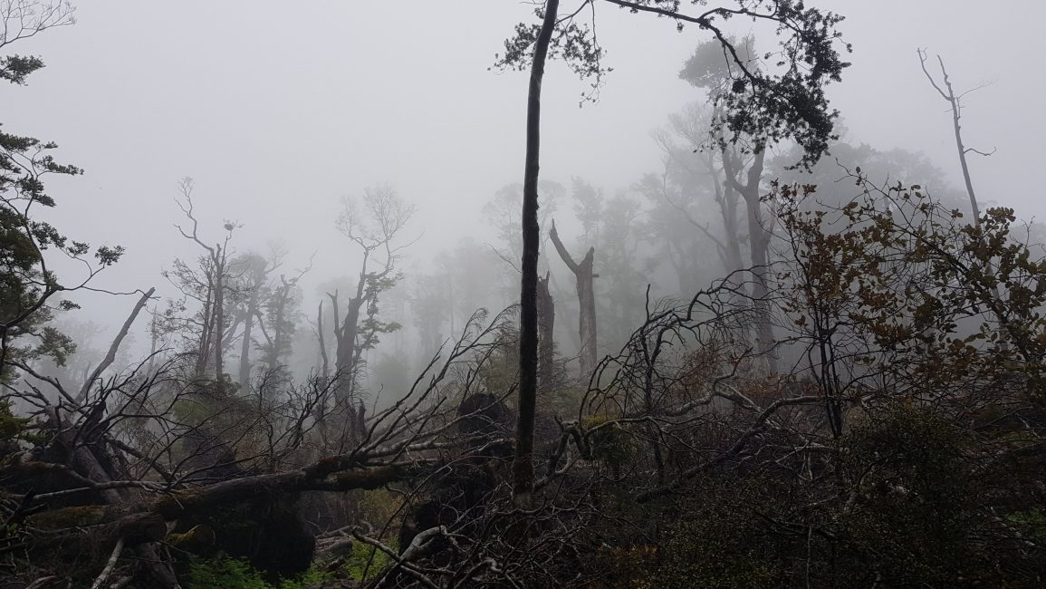Downed trees between Rocks hut and Browning hut