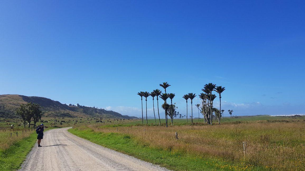 On the road to Karamea from Kohaihai campsite