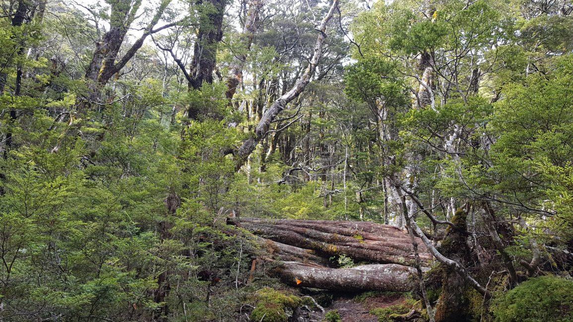 Plenty of tree fall