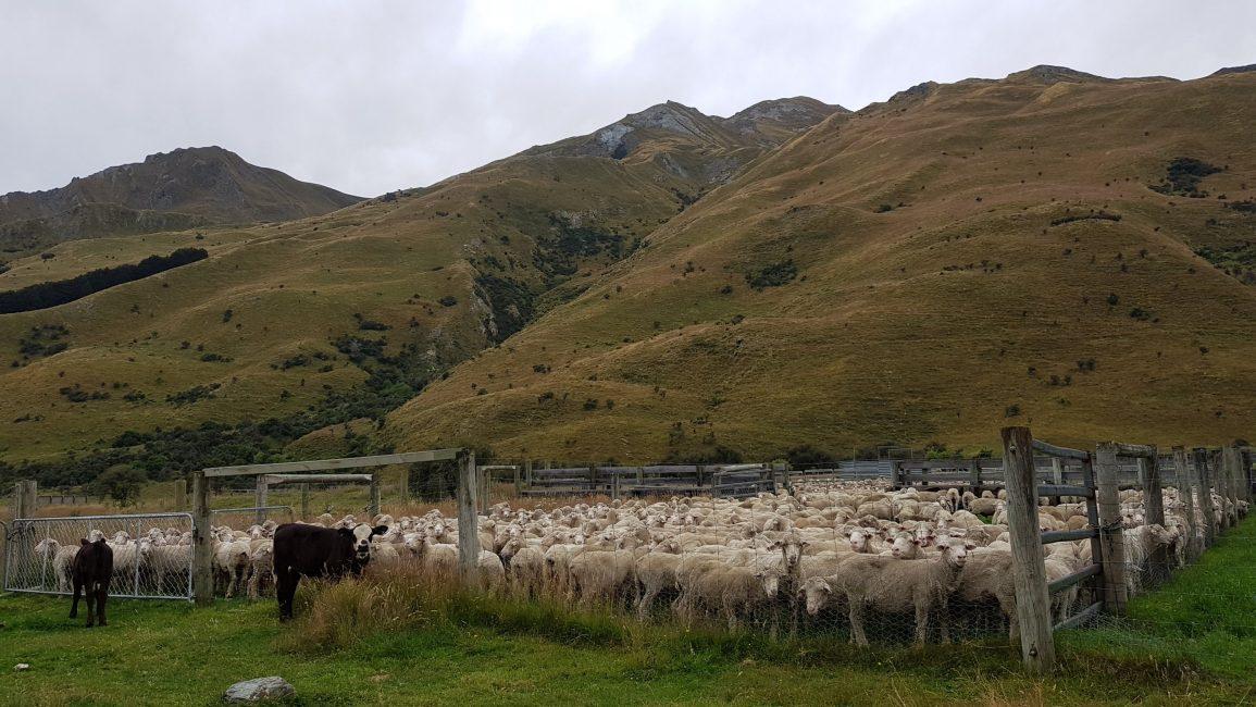 Meanwhile, back on the farm