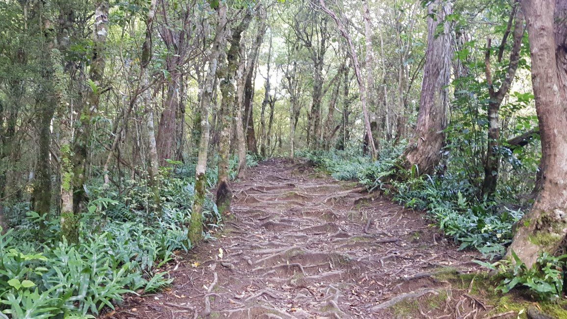 The start of Deer Spur track