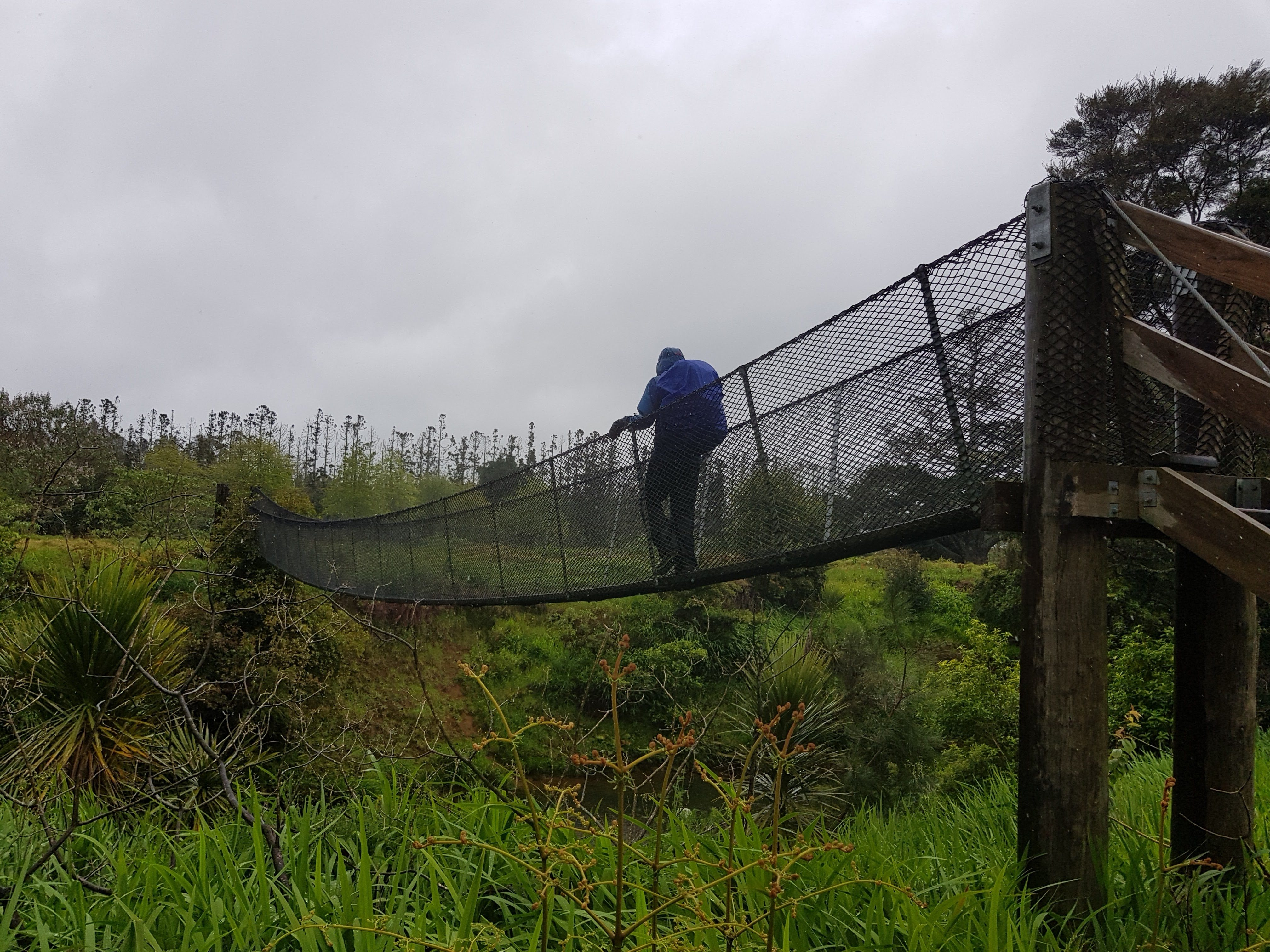 Swingbridge on the Kerikeri river walk