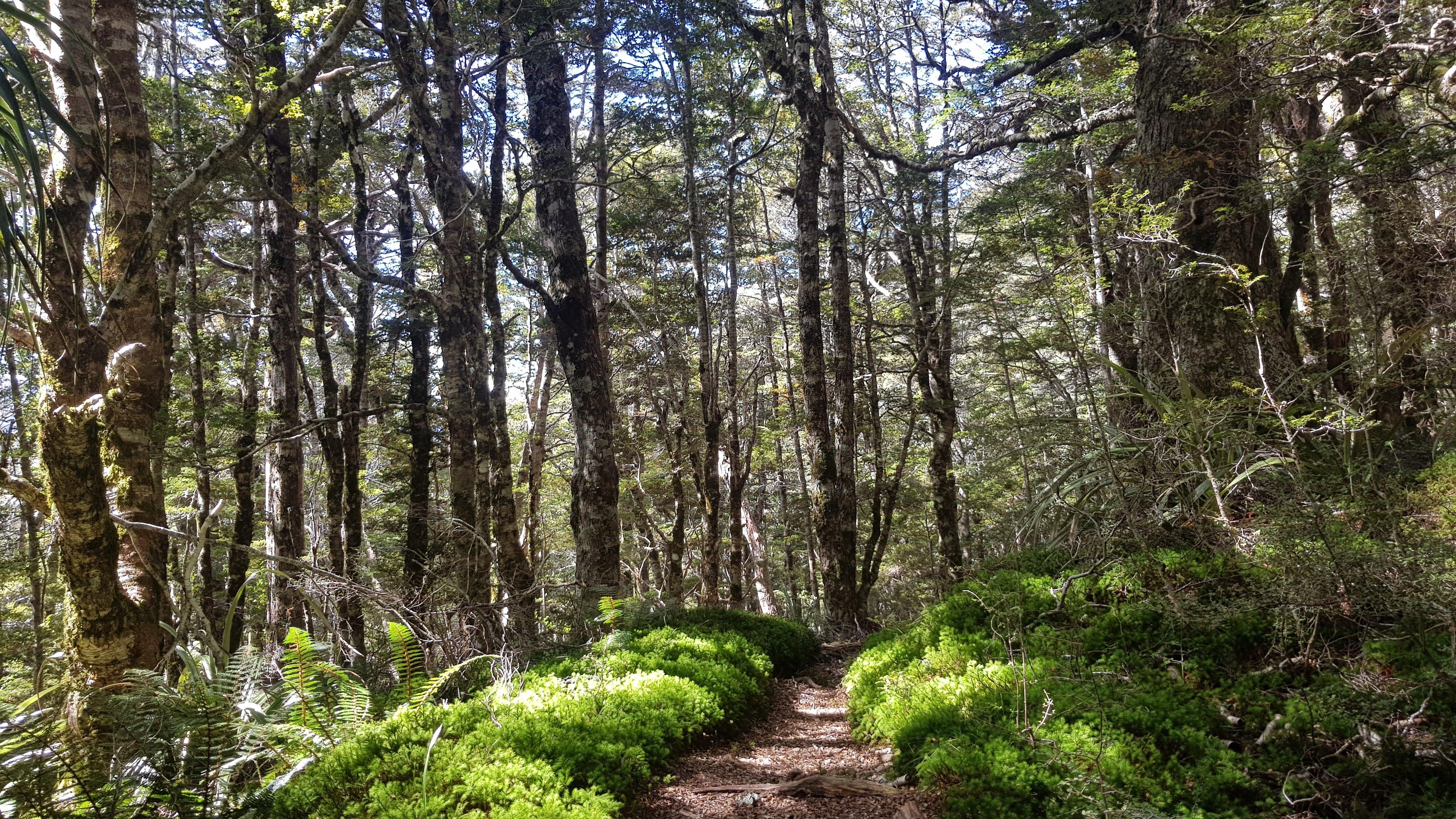 Through the forest on the Lake Peel Track Kahurangi National Park