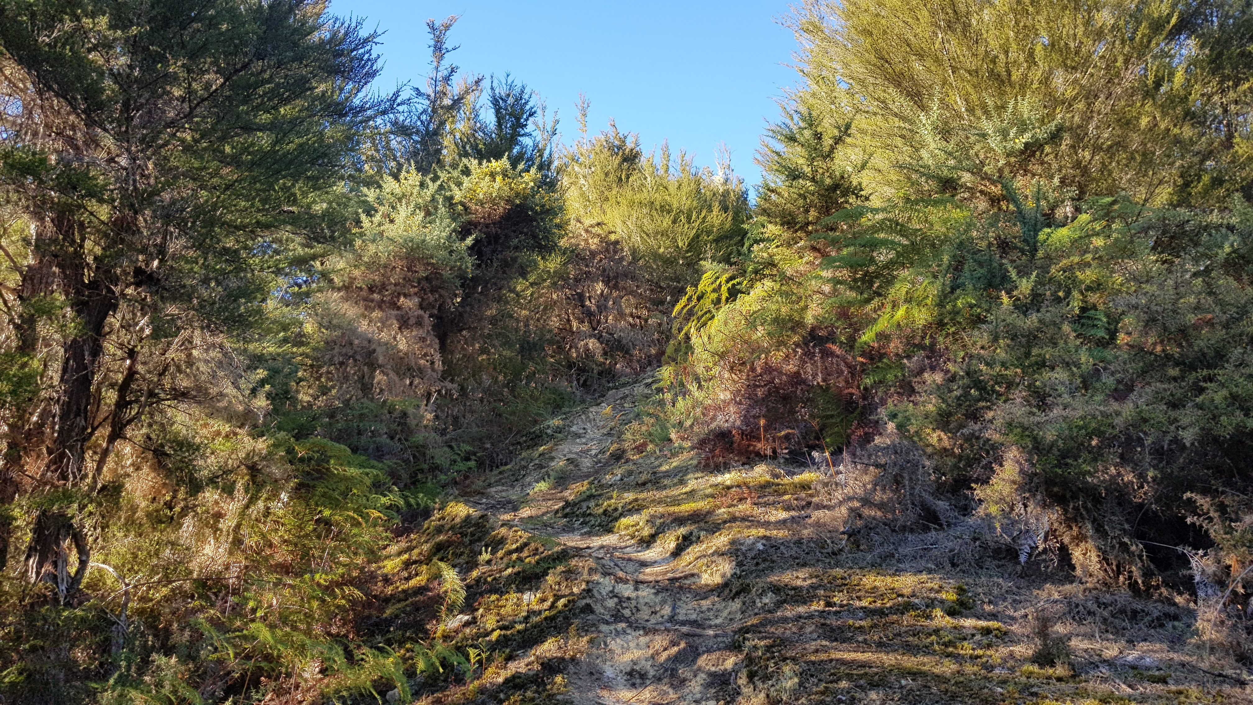 Starting the ridge track to Mount Owen