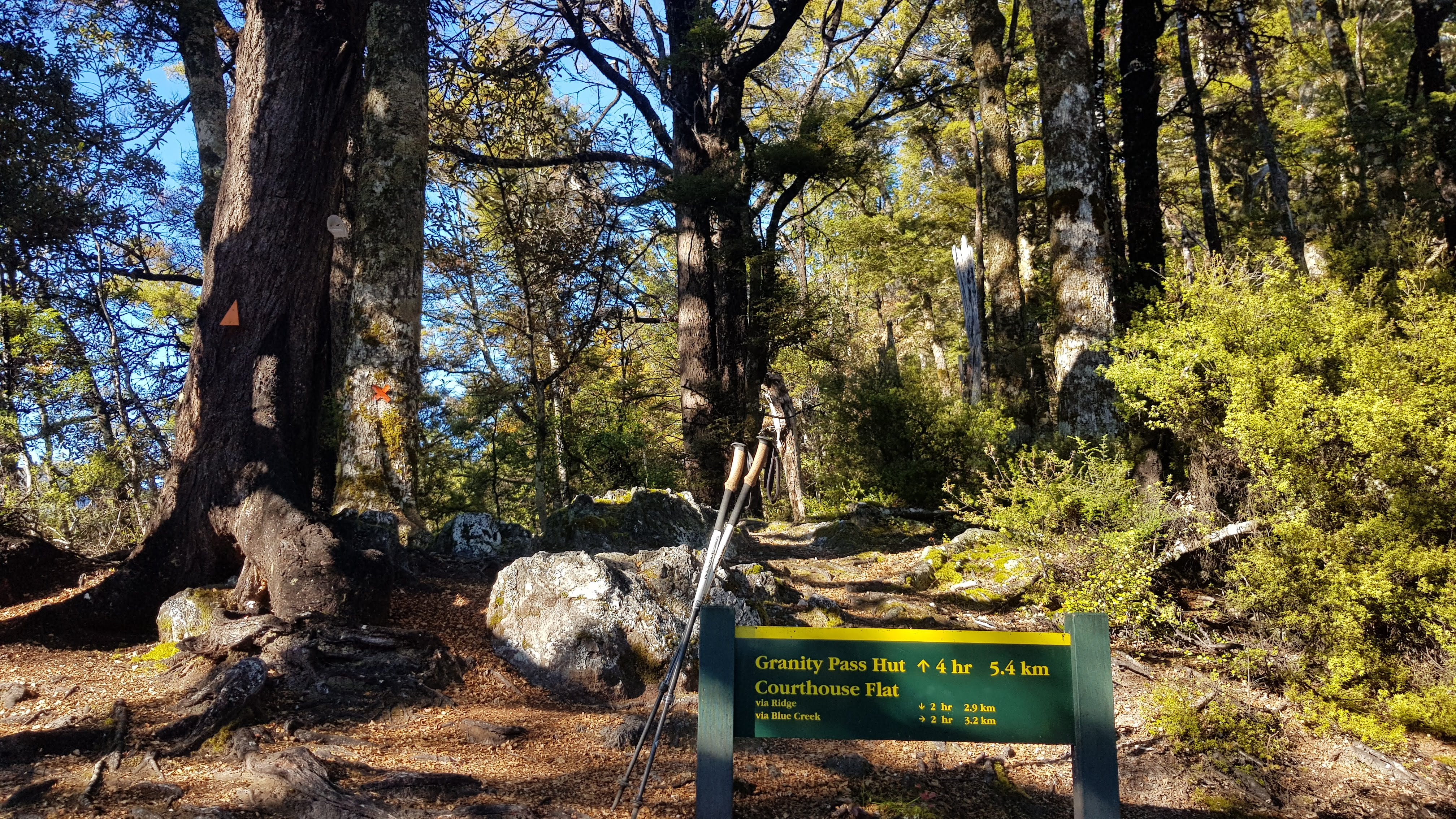 At the junction of the ridge and Blue Creek track