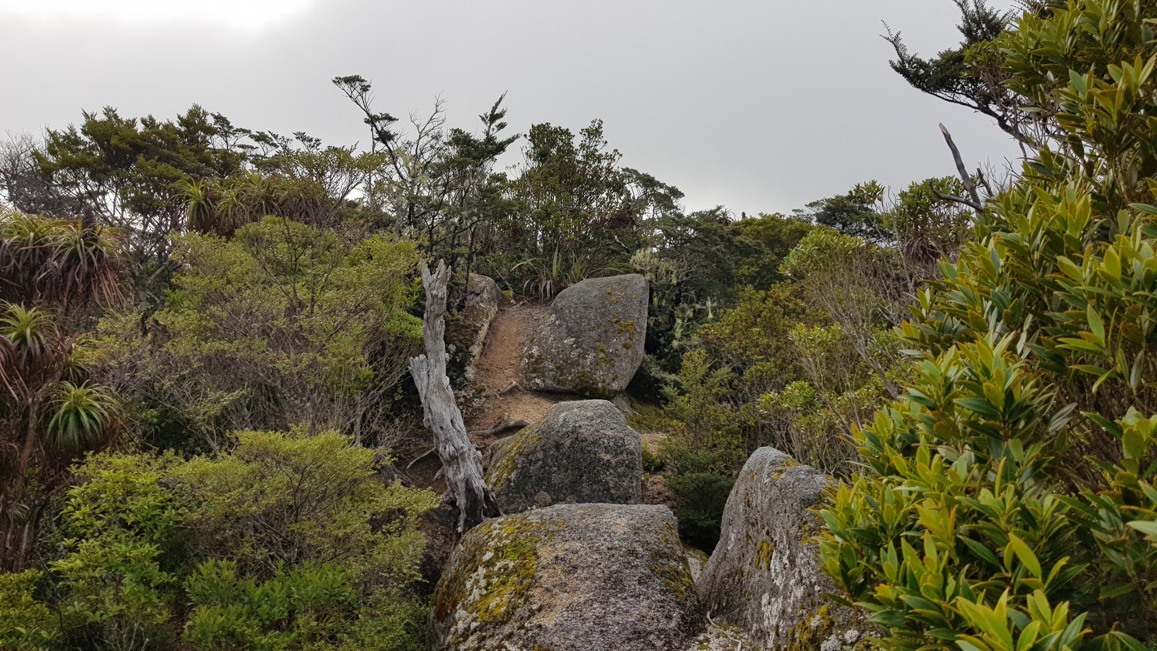 At Porter Rocks off the Abel Tasman inland track