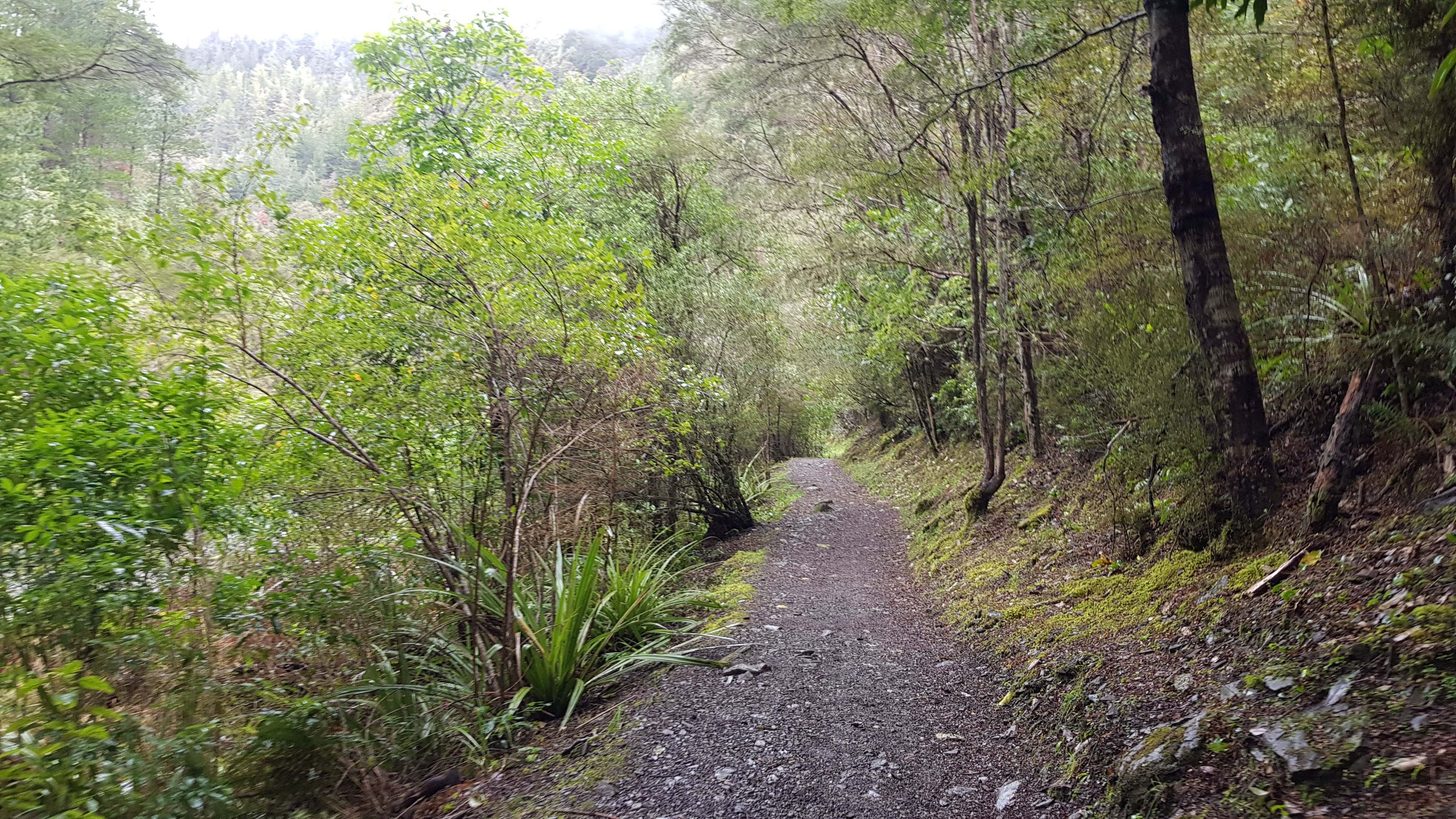 Through some nice forest sections on the Hacket Track