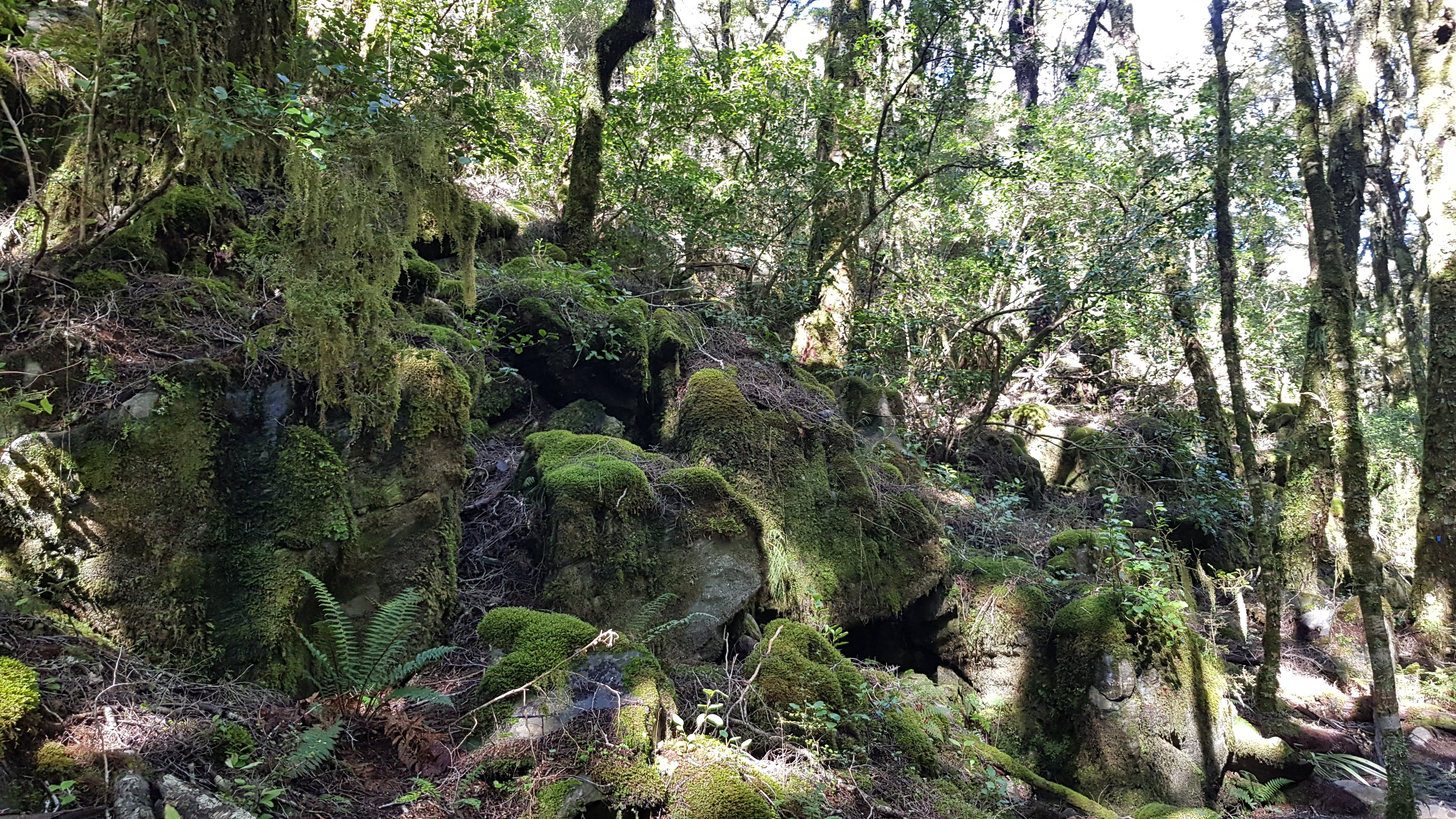 Beautiful limestone rocks on the Harwoods Hole track