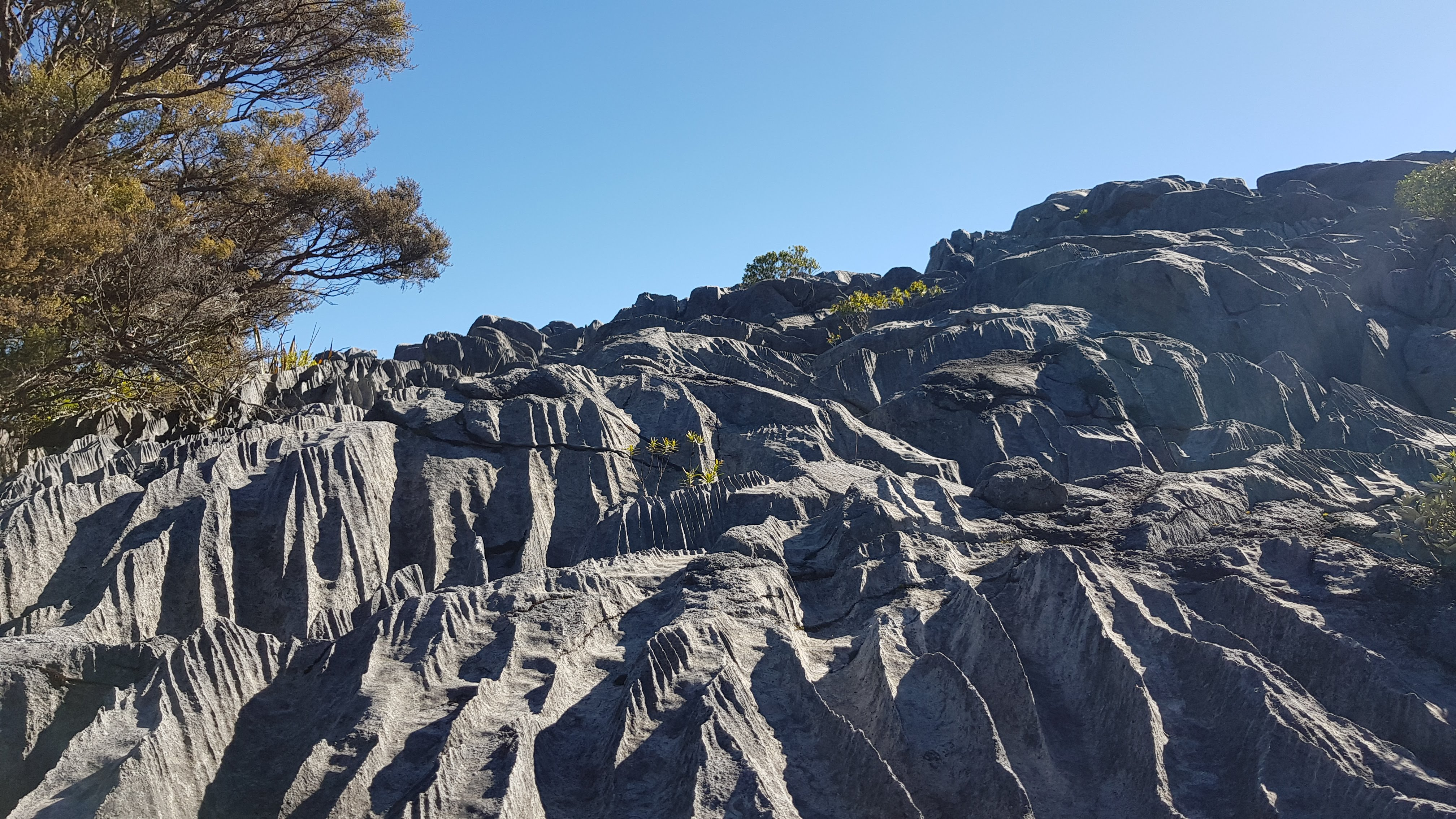 Sharp, fluted limestone rocks on the way up to the Gorge Creek lookout