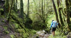 The Big River Track from Waiuta - Victoria Forest Park - Tinytramper