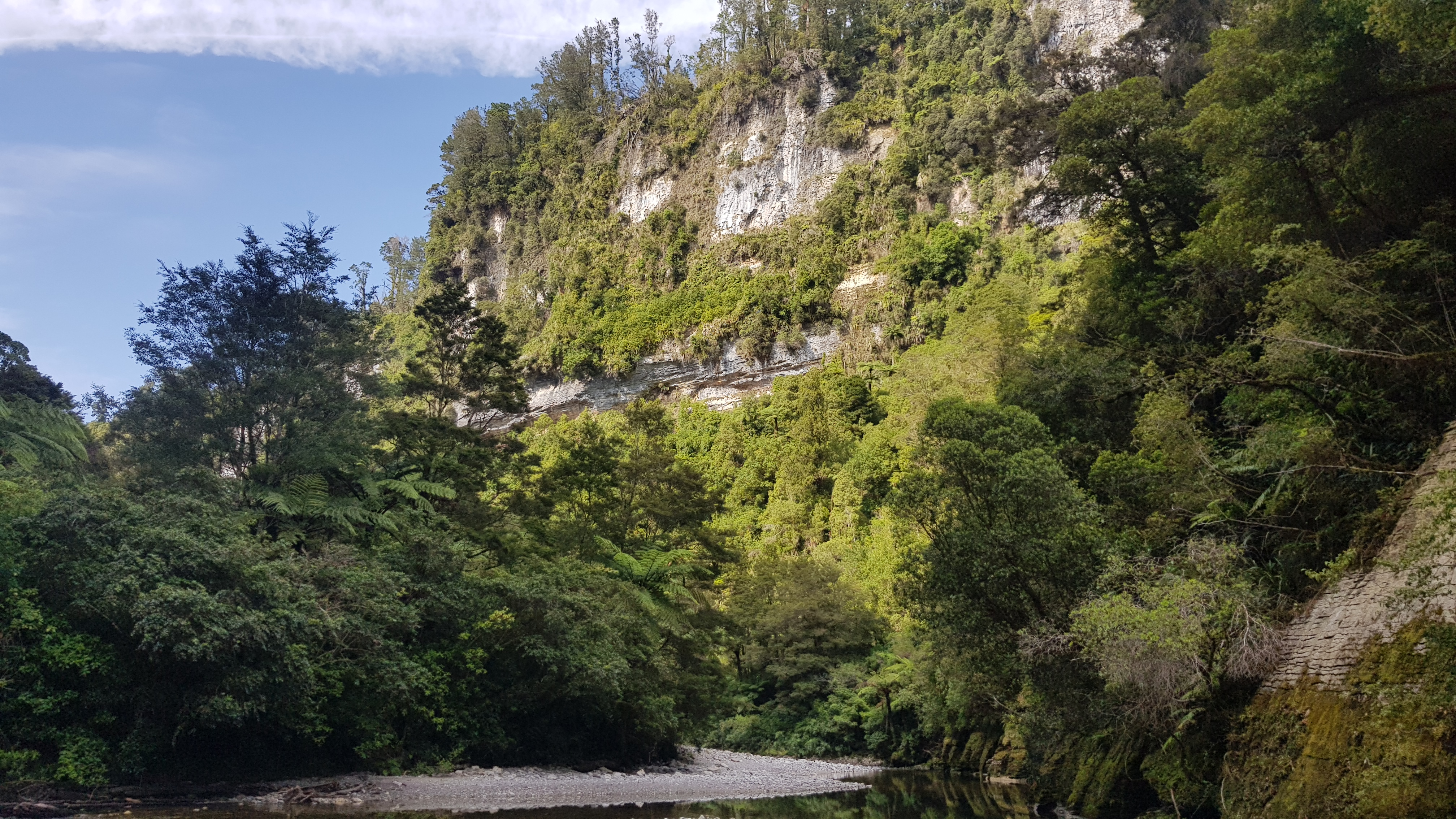 Dilemma Creek - Inland Pack Track