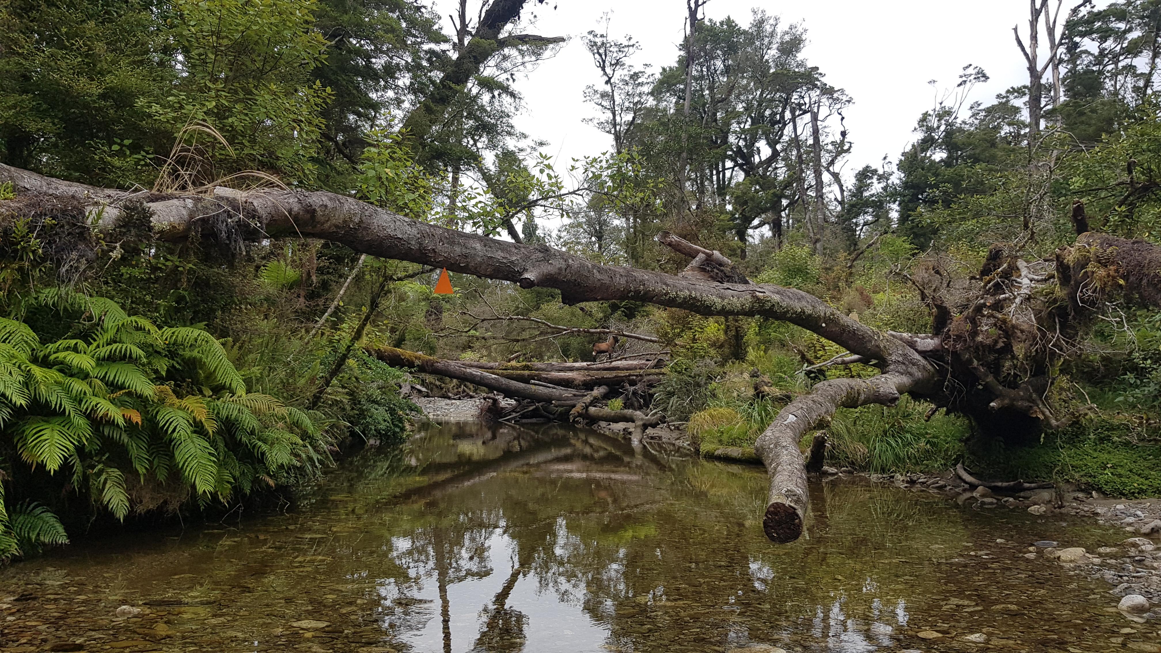 Treefall in Fossil Creek