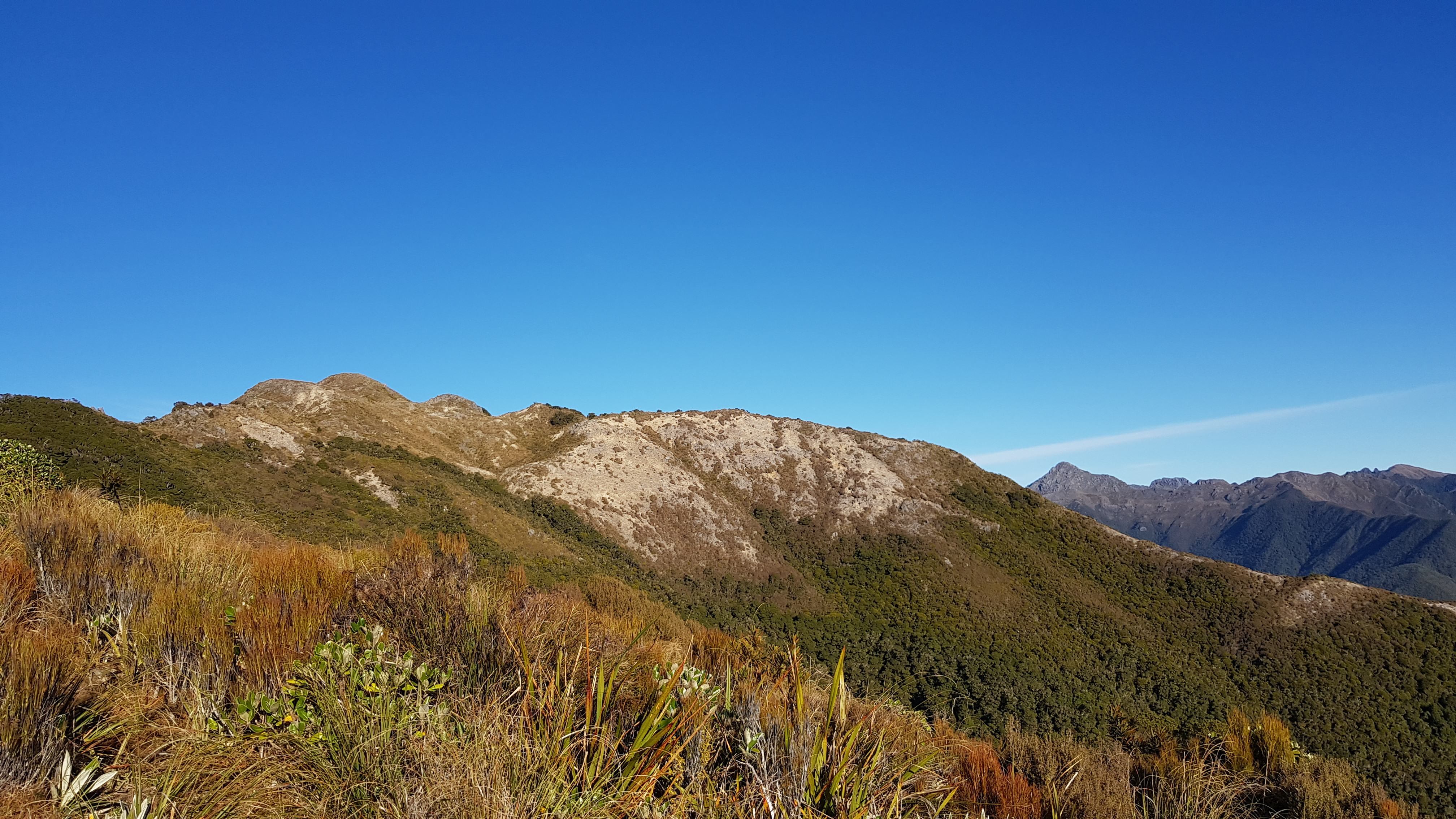 The start of the Paparoa Range from the Buckland Peaks track