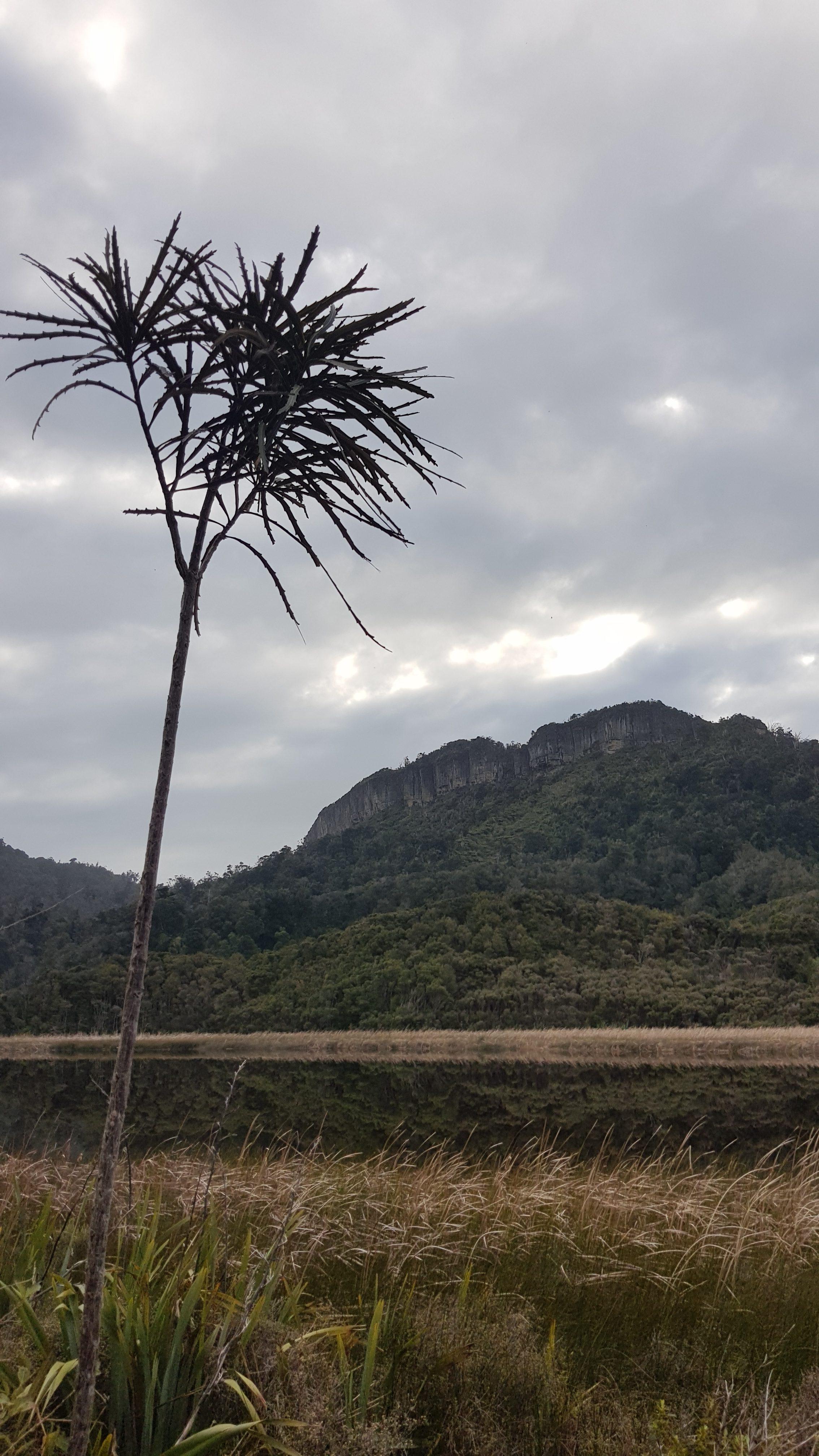 Mangarākau swamp