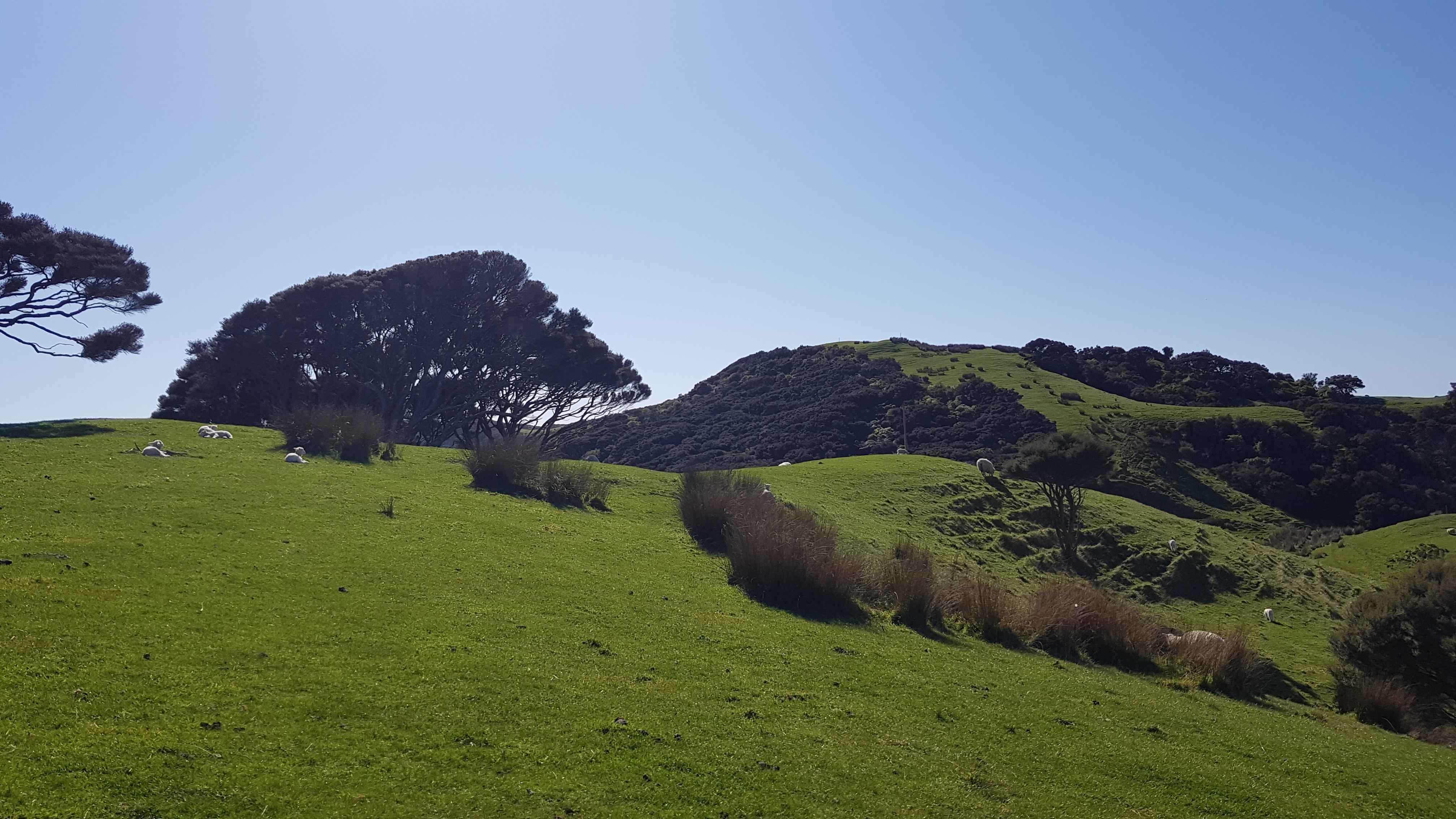 Puponga Hilltop Track