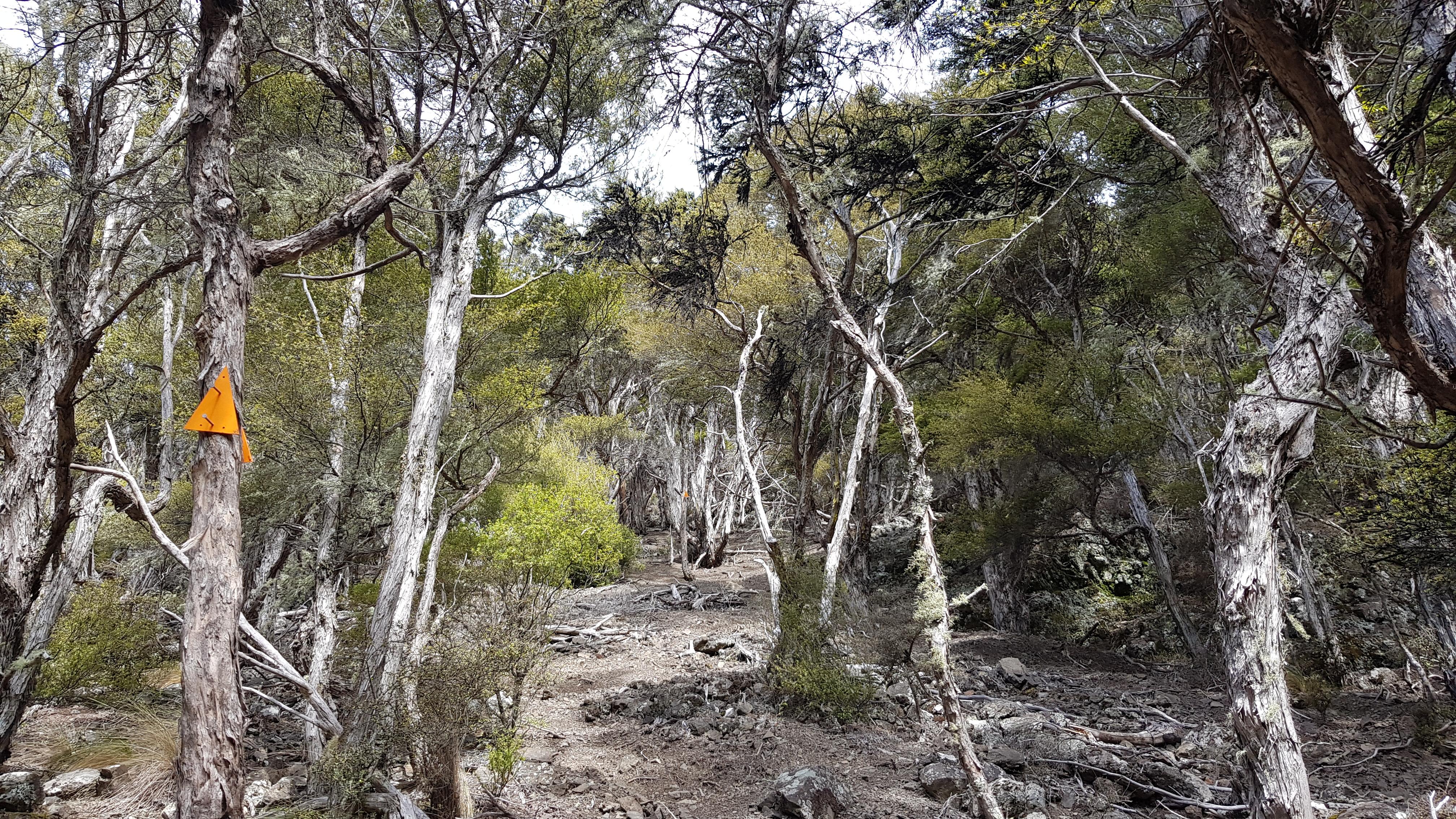 Climbing up to Black Birch bivouac